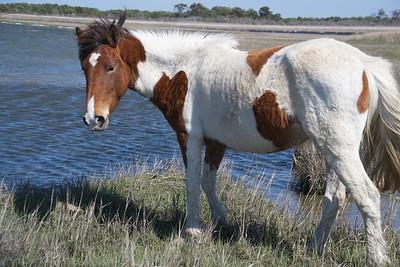 02 - National Park & Ponies